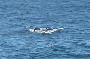Whale Watch, Bar Harbor Maine