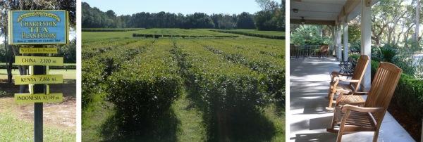 Charleston Tea Plantation, South Carolina