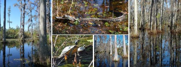 Cypress Garden, South Carolina