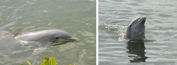 Dolphin Research Center, Marathon Key