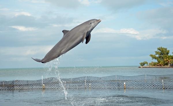 Dolphin Research Center, Marathon FL