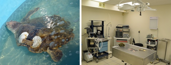 Turtle Hospital, Marathon Key, Florida