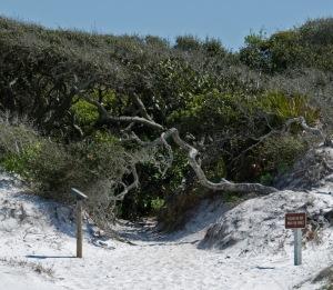 Grayton Beach Hobbit Hole